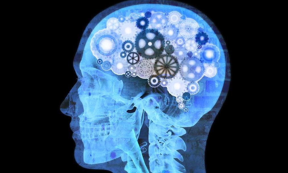 beautiful human brain